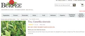 tea plant order burpee